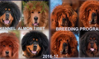 You can make a reservation for one of our puppies (2016-2017)