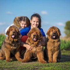 Lialia and Caesar puppies