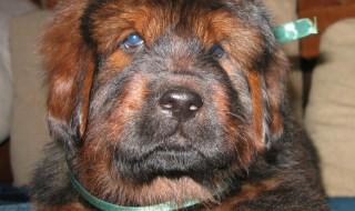 Мы опубликовали новые фото щенков от Азиль и Бао!