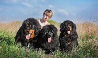 Новая фотосессия наших собак!